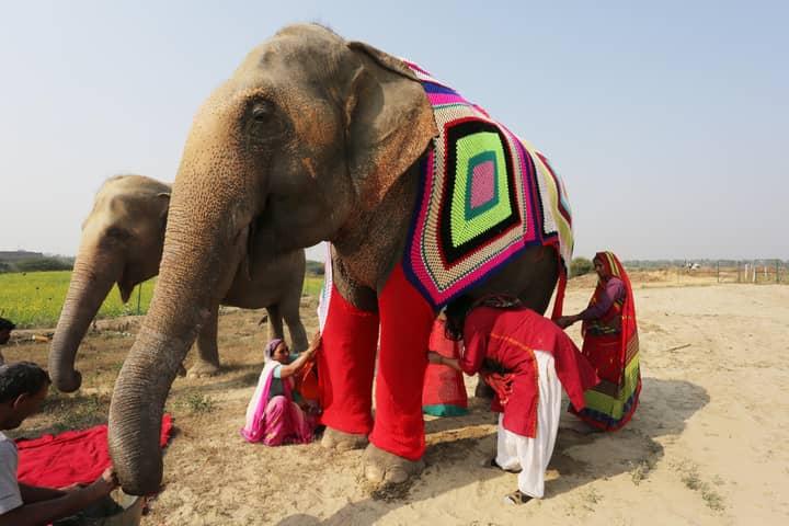 Indian Villagers Knit Super-Size Pyjamas For Cold Elephants