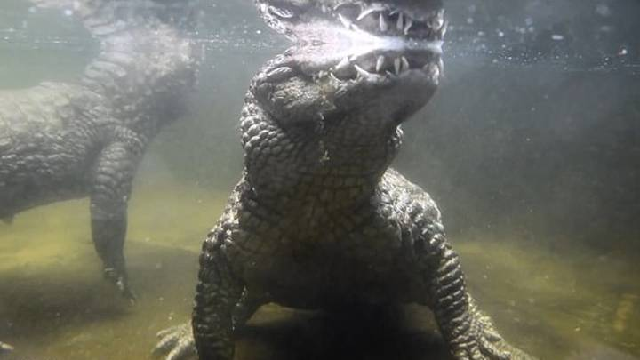Crocodile Hasn't Fathered Kids For Nearly 50 Years Because Of Small Penis