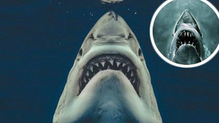 The Moment A Great White Shark Perfectly Recreated The Iconic Pose From Jaws