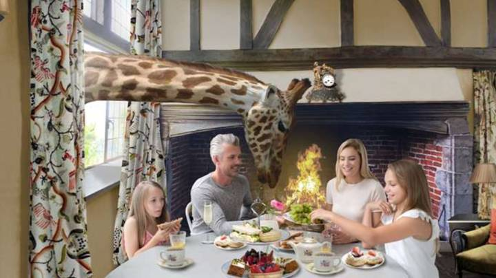 Giraffe Hotel Where Guests Come Up Close To The Animals Set To Open In UK