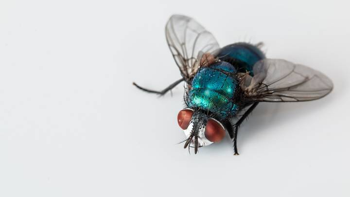 Woman Comes Up With Genius Way To Keep Flies At Bay