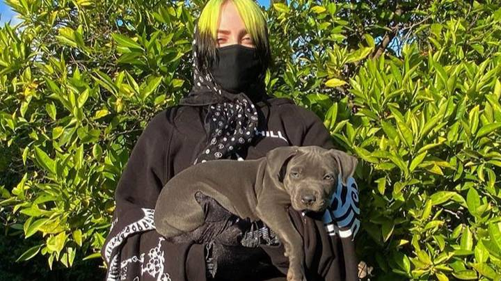 Billie Eilish's Dog Poos All Over Trainers Worth Thousands Of Dollars