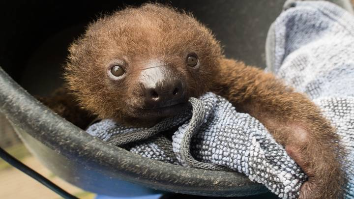 Sloth Selfies Suck,Here's How To Help Stop Them