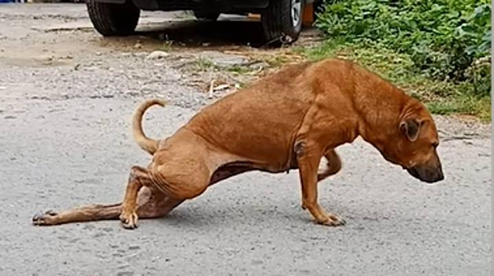 Dog Fakes Broken Leg In Order To Get People To Feed Him
