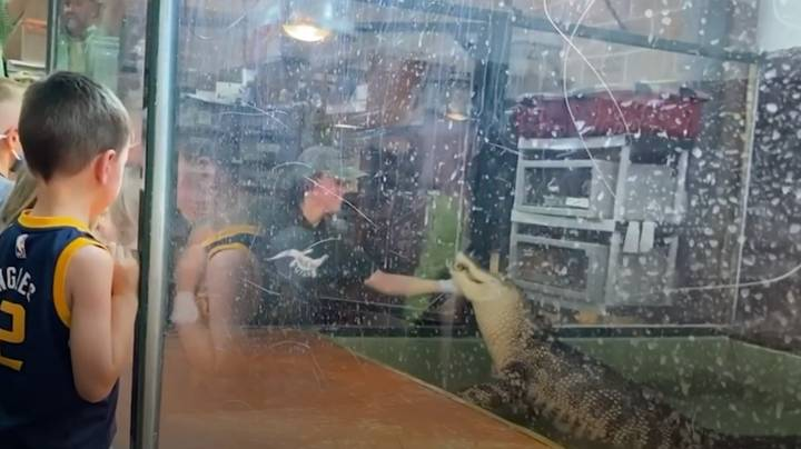 Zoo Visitor Leaps Into Alligator Enclosure To Save Handler After Reptile Bites Her Hand