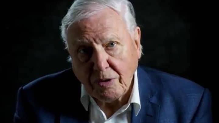 David Attenborough's New Netflix Documentary Leaves Viewers Distraught