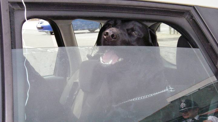 Study Finds A Shocking Number Of People Leave Their Dogs Alone In Cars