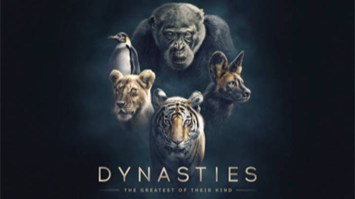 First Footage Of Sir David Attenborough's New Series 'Dynasties'