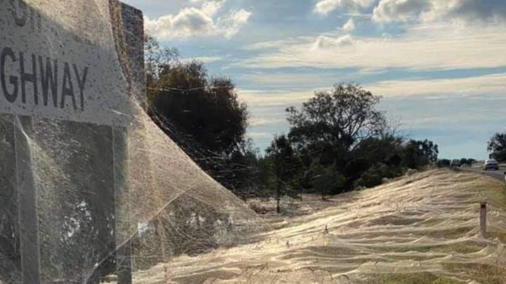 Photos Show 'Spider Apocolapyse' After Australian Floods