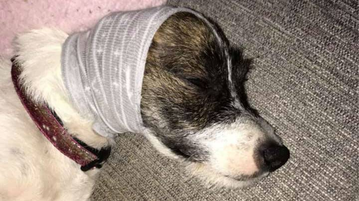 Dog Owner Shares Cost-Free Hack To Help Soothe Pets On Bonfire Night