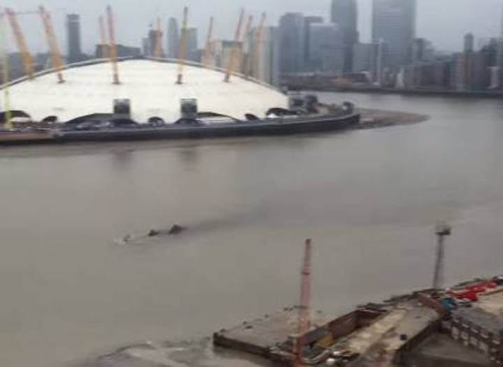 What The Fuck Is This Black Alien River Monster Roaming The Thames?