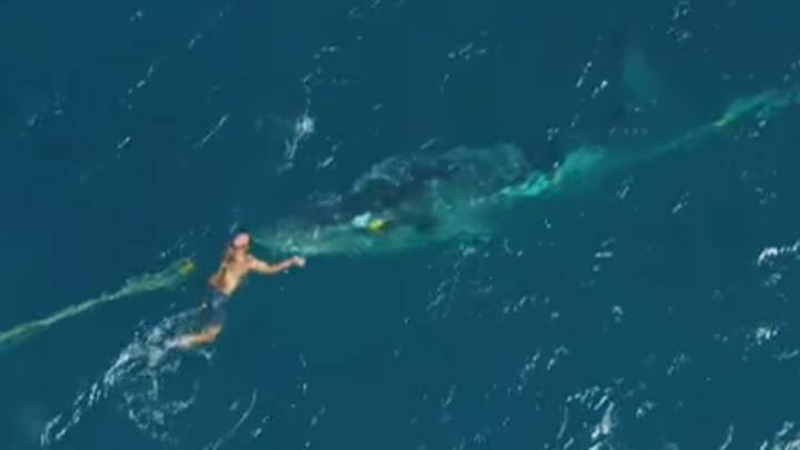Man Hailed A Hero For Jumping Into Ocean To Free Baby Whale Trapped In Netting