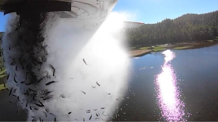 Incredible Video Shows Thousands Of Fish Dropped From Plane To Restock Lakes