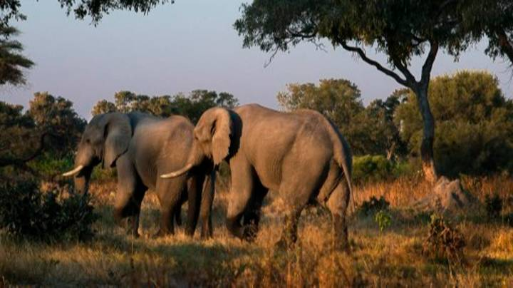Botswana Could Lift Hunting Ban And Let People Shoot Elephants