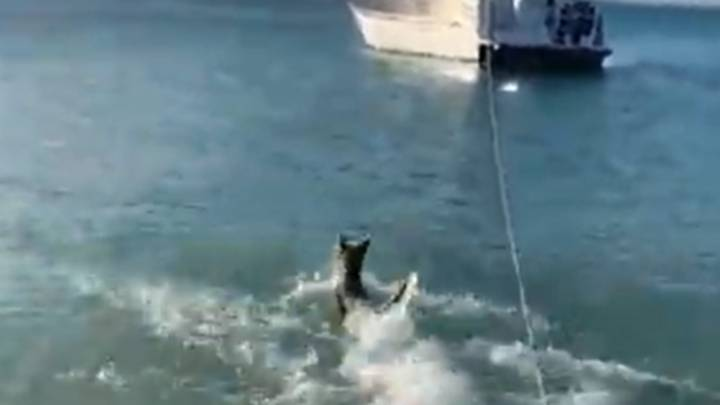 Brave Dog Jumps Into Sea To Chase Off Shark