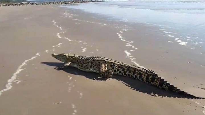 10ft Crocodile Crawls Out Of Sea Onto Popular Tourist Beach