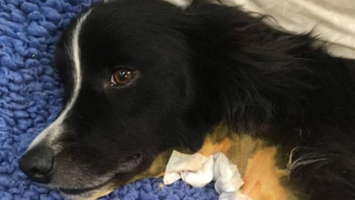 Vet Issues Warning To Dog Owners About Playing With Sticks