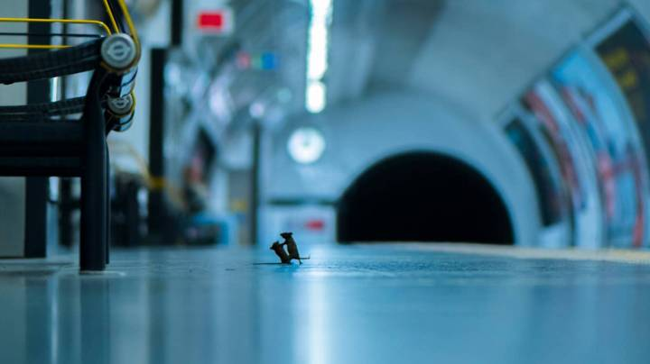 Picture Of Mice Fighting At London Underground Wins Wildlife Photo Of The Year