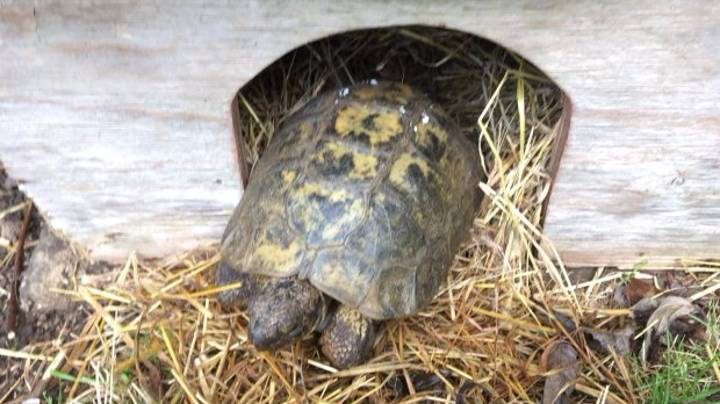 Tortoise Travels Six Miles To Local Zoo For Female