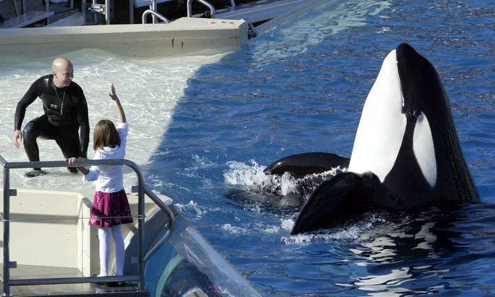 SeaWorld Has Announced It Will Be Stopping Killer Whale Shows