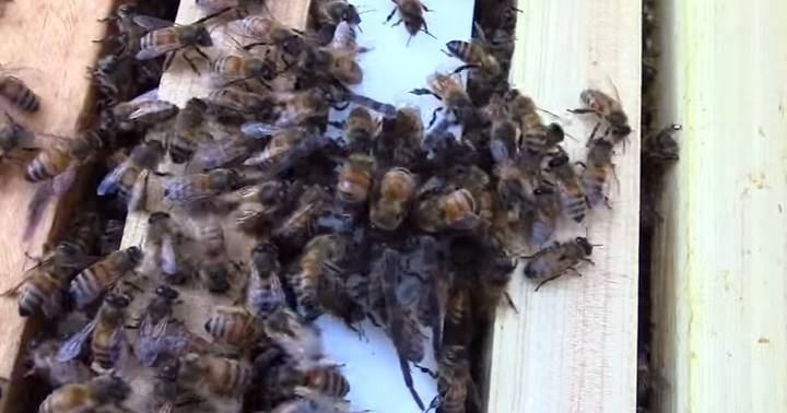 Spider Reckons He Can Start On These Honey Bees, Gets Slaughtered