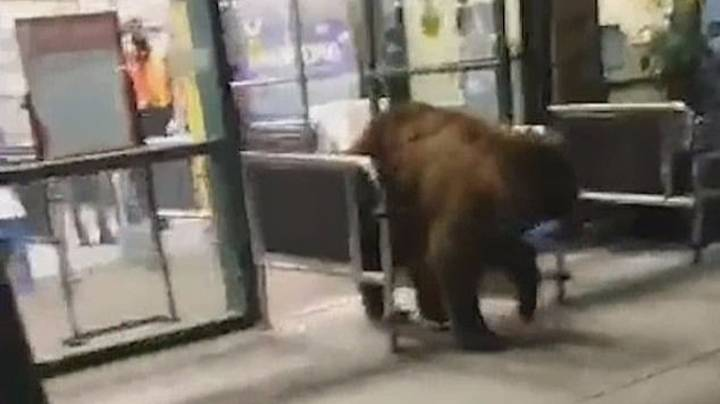 Woman Films Bear Stealing Packet Of Crisps From Californian Grocery Store