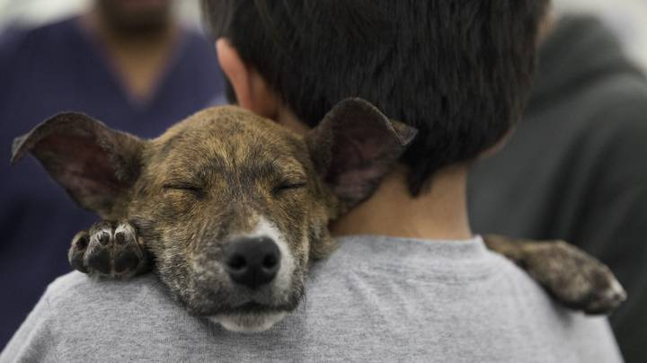 PETA Founder Wants To Ban The Term 'Pet' Because Cats And Dogs Are 'Equals'