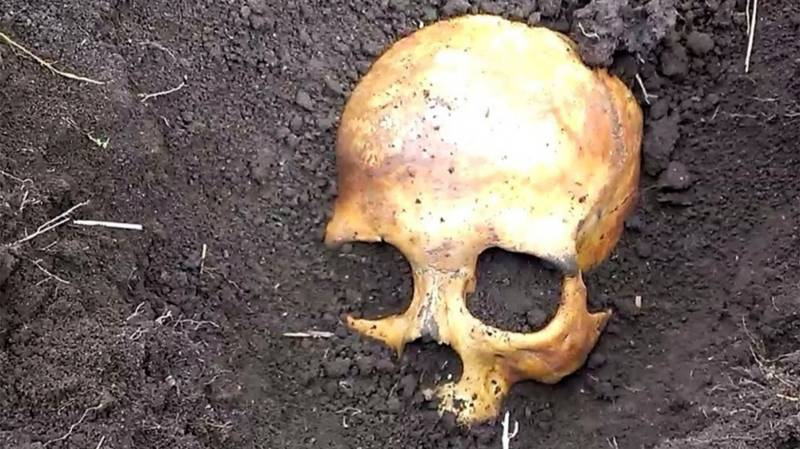 Man Finds Skull In Potato Patch, Wife Calmly Tells Him It Belonged To Her Ex