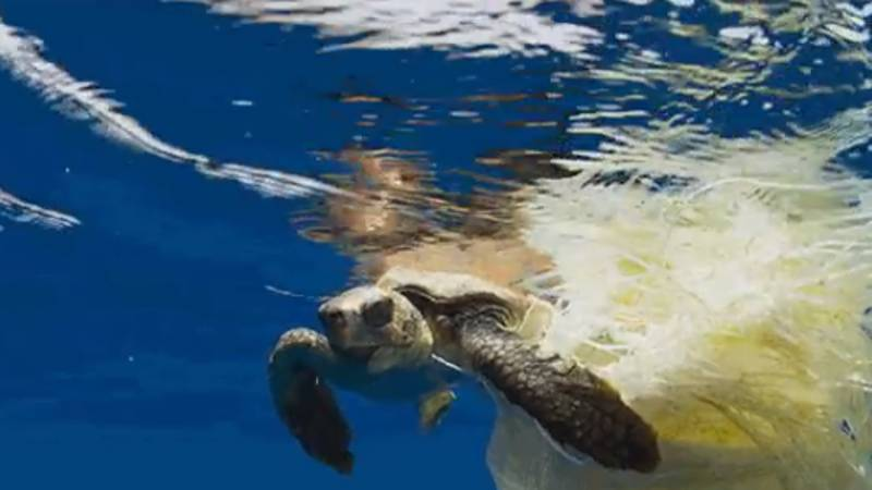 People On Social Media Vow To Limit Plastic Use After 'Blue Planet II' Episode