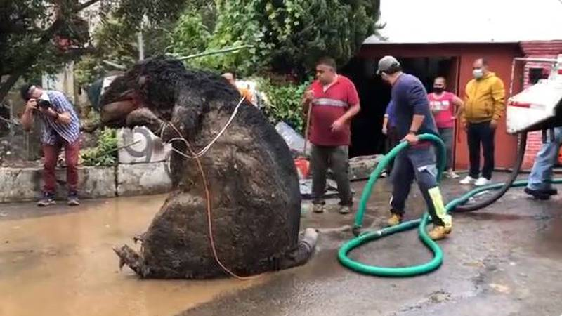 Prop Of A Giant Rat Discovered To Be Blocking Sewer