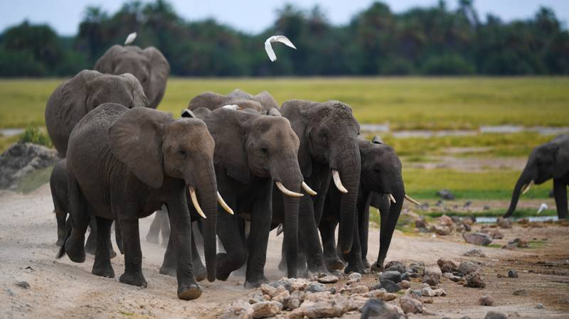 One Of Africa's Largest Reserves Marks One Year Without Any Elephants Being Poached
