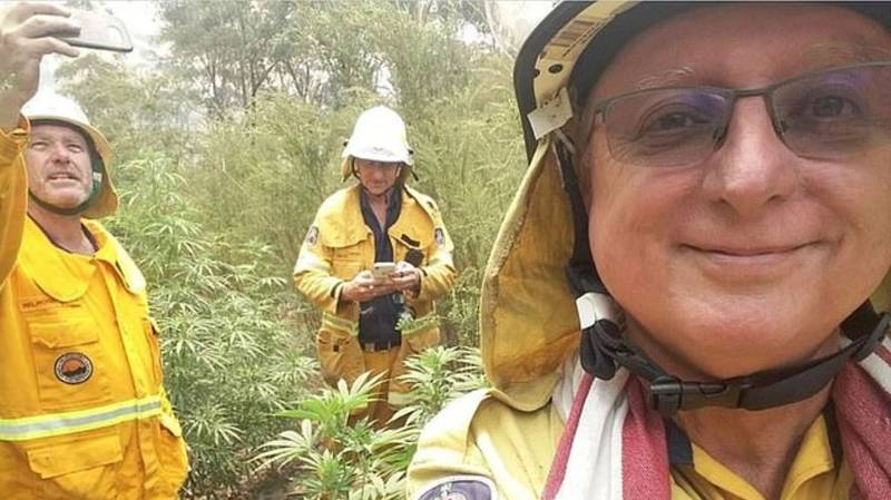 Firefighters Stumble Across Huge Cannabis Crop While Fighting Bushfires In Australia