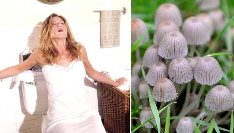 Scientists Discover A Volcanic Mushroom That Gives Women 'Instant Orgasms'