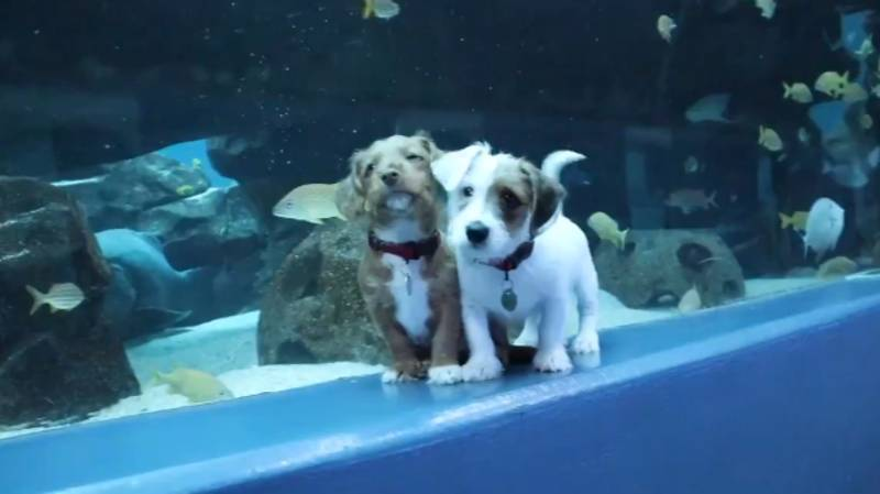 Puppies Get Taken On Day Out To Deserted Aquarium