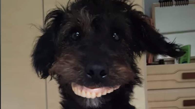 Woman Left In Stitches After Her Dog Steals Mum's False Teeth