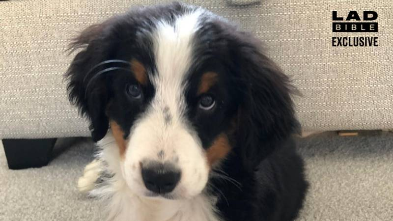 11-Week-Old Puppy Dies After Being Bought From 'Dogfishing' Seller