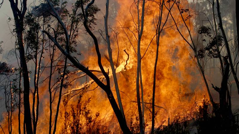 Red Cross Admits It Will Keep Some Money Donated To Bushfire Relief For 'Administration Costs'
