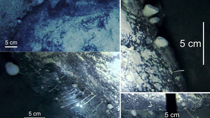 Scientists Accidentally Discover Remarkable New Life Underneath An Antarctic Ice Shelf