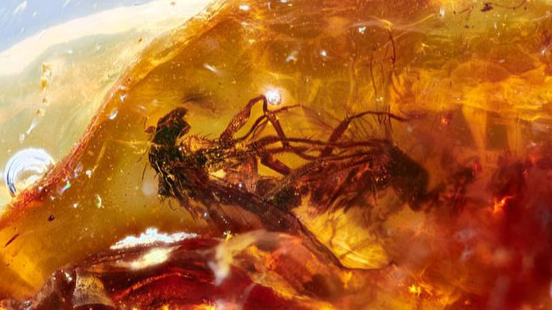41-Million-Year-Old Flies Trapped In Amber And Caught In The Act