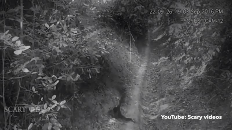 Video Shows Ghost Attack Young Boy In A Forest