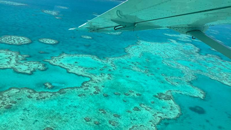 Great Barrier Reef Experiences Third Bleaching Event In Five Years