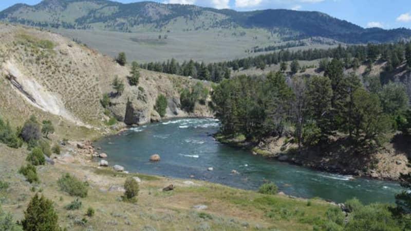 Yellowstone Park Officials Offer $10,000 Reward After White Wolf Was Shot Dead