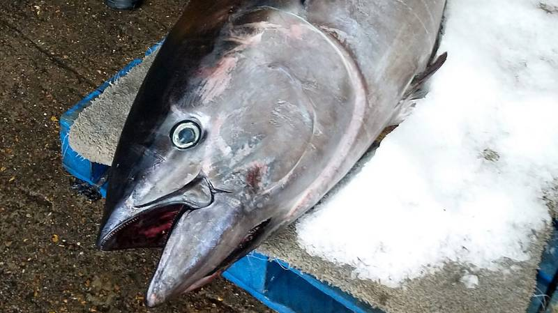 World's Most Expensive Fish Found On UK Coast