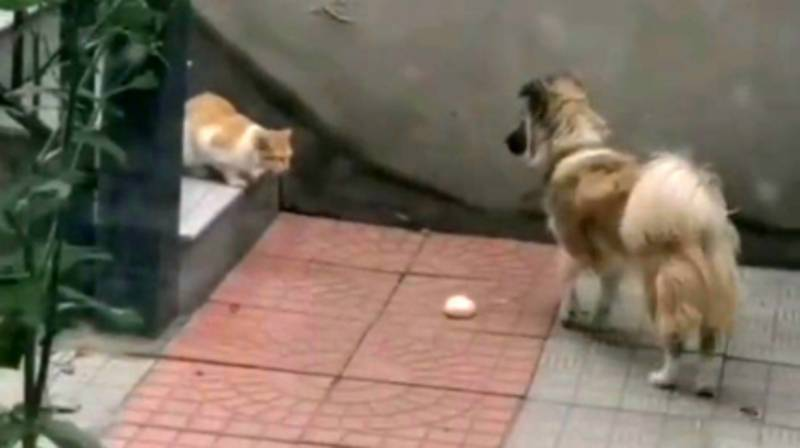 Adorable Dog Shares Food With Hungry Stray Cat