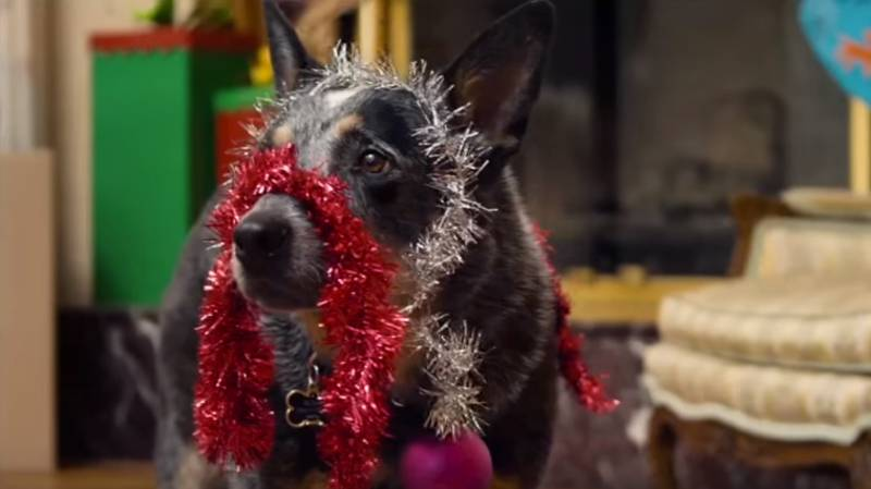 'Home Alone' Has A Dog-Themed Knock-Off Called 'Bone Alone'