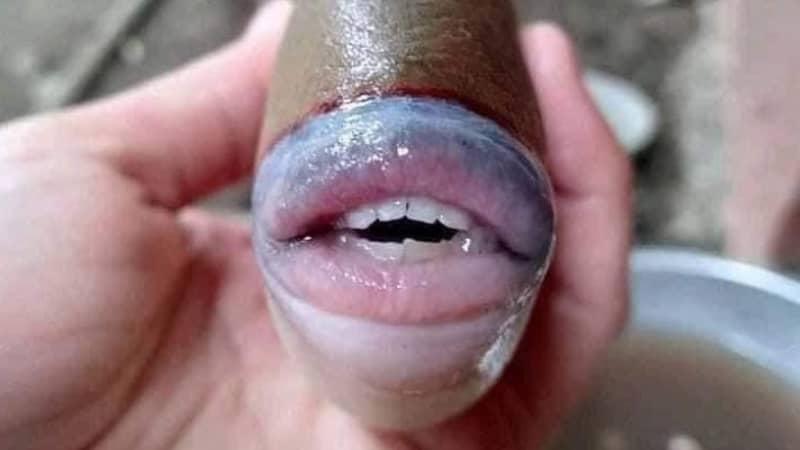 Bizarre Fish With Human-Like Teeth Caught In Malaysia
