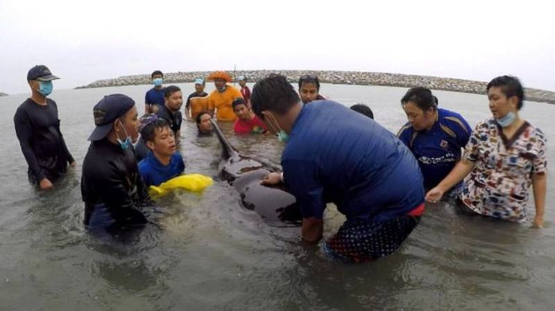 Thai Whale Died After Swallowing Up To 80 Plastic Bags