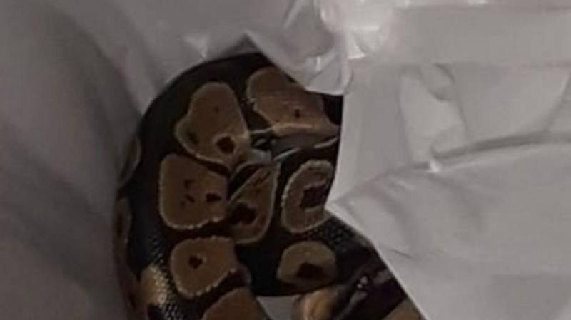 Woman Finds Python In Washing Machine After Mistaking It For Snake Print Garment