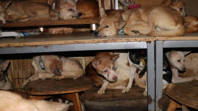 164 Dogs Rescued From A Tiny House In Japan