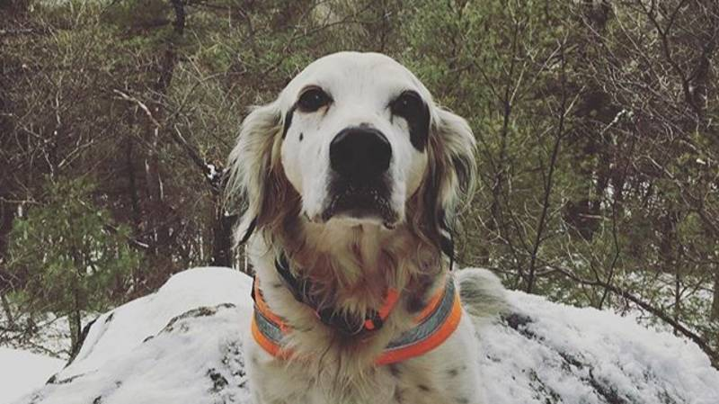 A Brave Dog Called Pete Died Saving His Friends From A Bear